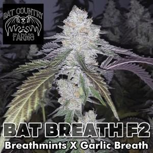 bat-country-strains-bat-breath