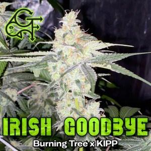 green-fish-strain-irish-goodbye