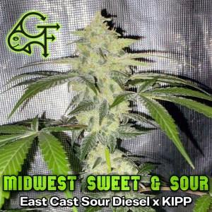 green-fish-strain-midwest-sweet-n-sour