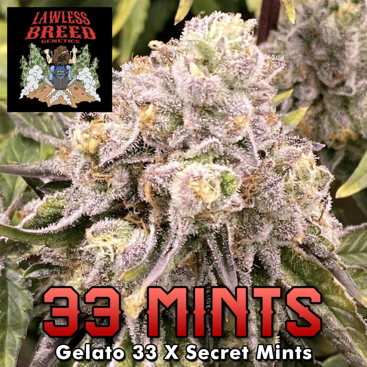 lawless-strain-33-mints