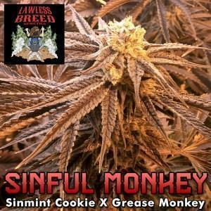 lawless-strain-sinful-monkey