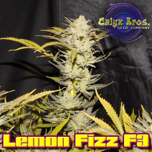 lemon-fizz-f3-1