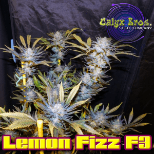 lemon-fizz-f3-3